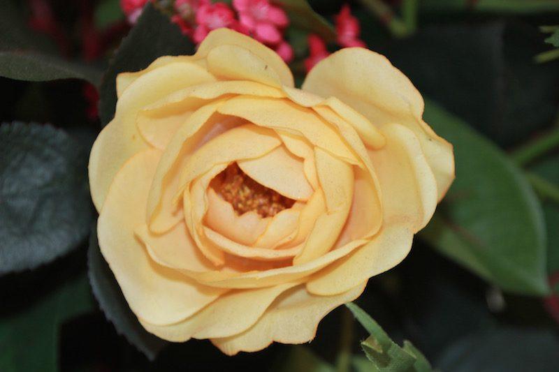 Boeket (kunst)bloemen
