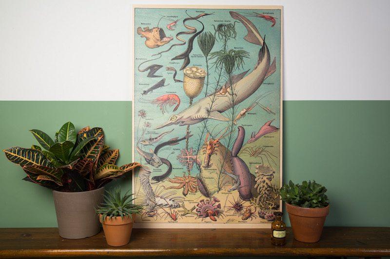 Schoolplaat aquarius